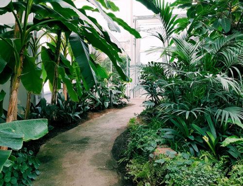 Botanička bašta kao legat budućim naraštajima